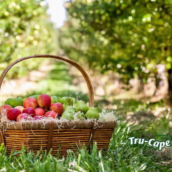 Tru-Cape Fruit Basket